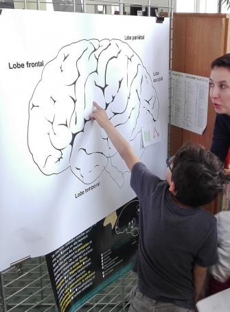Semaine du cerveau 2019 - Paris