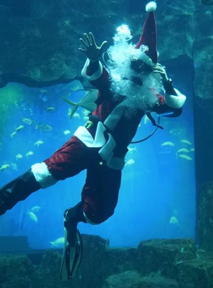 Noël 2018 à l'Aquarium de Paris : Père Noël plongeur