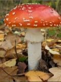 Cueillette de champignons au Parc de la Deûle