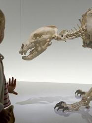 Muséum de Toulouse @Christian Nitard, Muséum de Toulouse