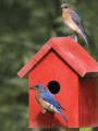 Atelier Cabanes à oiseaux au Vaisseau