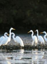 Réserve ornithologique de Saint Laurent du Var