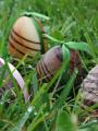 Chasse aux oeufs de Pâques 2014 à Wattrelos