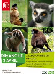 A la rencontre des primates
