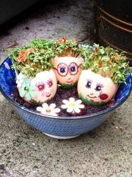 Mini jardin en coquilles d'oeufs