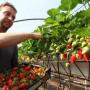 Fête des fraises de Carros