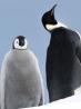 Expo : Antarctica