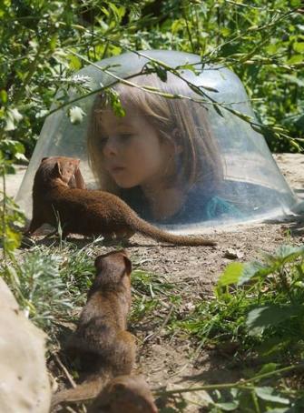 Découverte des mangoustes