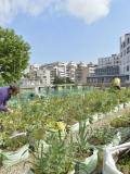 Paris, jardin nourricier