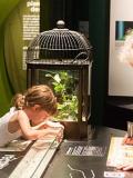 Vacances au Muséum de Nantes - Mille milliards de fourmis