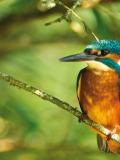 Ateliers et animations à Terres d'oiseaux