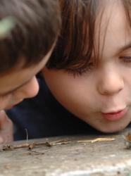 Atelier comptage des escargots © Franck Dunouau