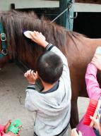 Fête du Cheval au Bouscat - Activités enfants