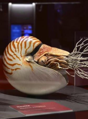 Expo : Éternité, rêve humain et réalités de la science