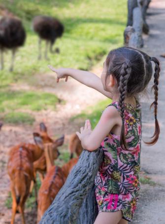 Top des sorties pour les amoureux des animaux près de Nice