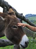 Ecotourisme en Alsace