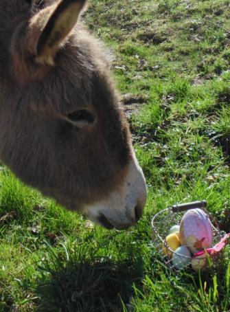 Le havre aux ânes : chasse aux œufs de Pâques 2019