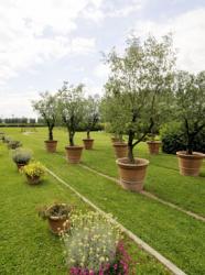Mosaic Jardin