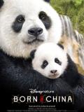 """Né en Chine - Affiche en anglais """"Born in China"""""""