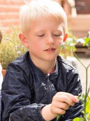 Planter des herbes aromatiques.