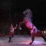 Grand Cirque de Noël Medrano