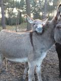 Histoires d'ânes - La Bouëxière