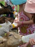 La Ferme exotique - Nourrissage chèvre