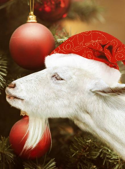 Noël à la ferme