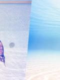 Cours de nage sirène