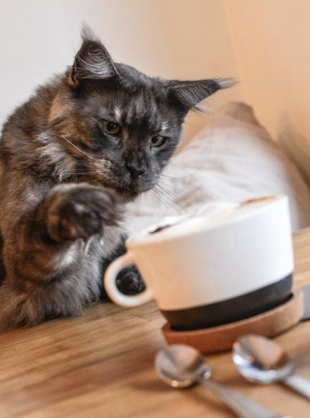 Café à chats La Ronronnerie