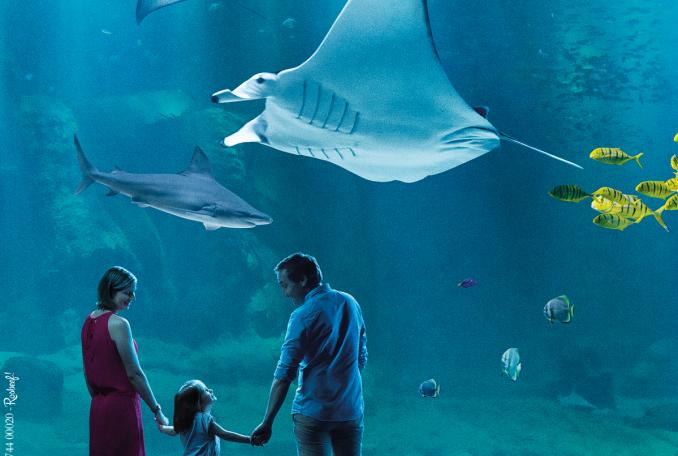 Aquarium Nausicaá - Centre national de la Mer