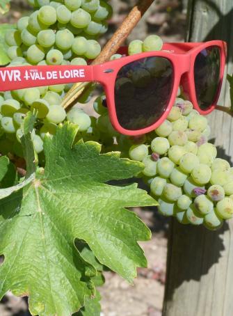 Vignes Vins Randos - En famille