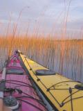 Canoë-kayak sur la Leyre