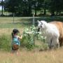 Les Lamas de Brandacot
