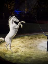 Equestriades 2016