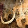 Expo Derrière la paroi la grotte Chauvet