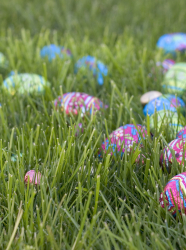 Oeufs en chocolat dans l'herbe