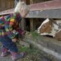 Enfant à la ferme