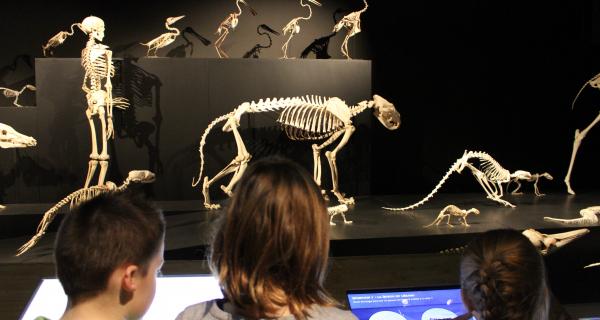 Les sorcies au museum : animation pour enfants