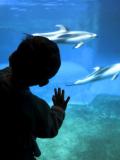 Enfant aquarium