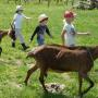 Ferme du Grand Juan - Enfants en balade avec des chèvres