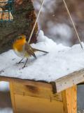 Atelier Cabanes à oiseaux