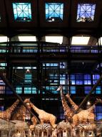 Muséum national d'Histoire naturelle  - Grande Galerie de l'Évolution