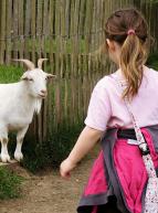 Une enfant à la ferme