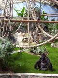 Zoo de St Martin la Plaine