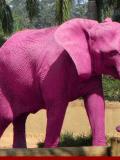 Eléphants roses du 1er avril