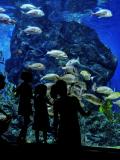 Top 10 des aquariums à visiter en famille