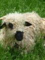 Brin de culture : agneau