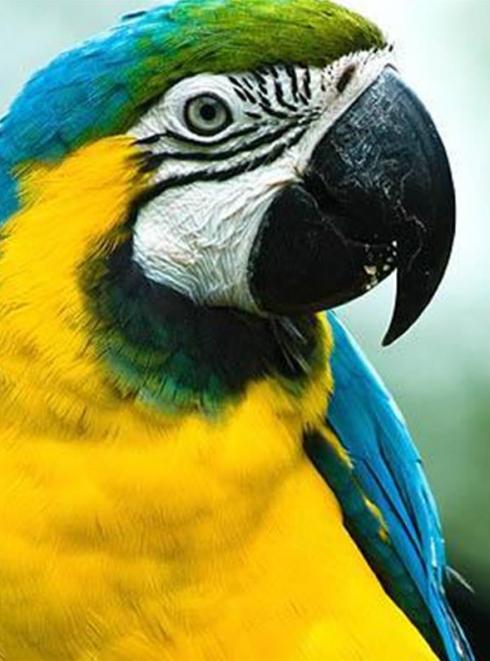 Tropical Parc - perroquets
