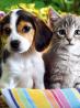 Salon du chiot et du chaton Ioupsi et Joke 2017